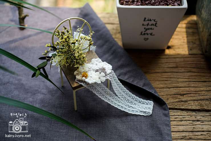 제주 담에핀꽃